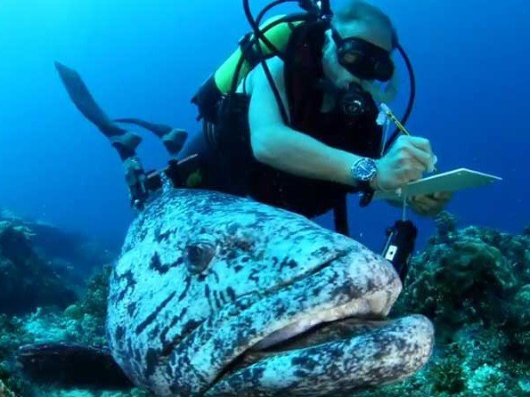 Blancpain - Vidéo. Pristine Seas Expeditions | Outer Seychelles Islands